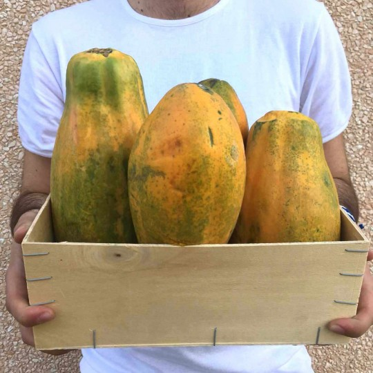 Papaya Formosa in cassetta: Acquista Online su FruttaWeb.com
