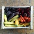 Box di Carote Colorate: Acquista Online con un Click su FruttaWeb.com