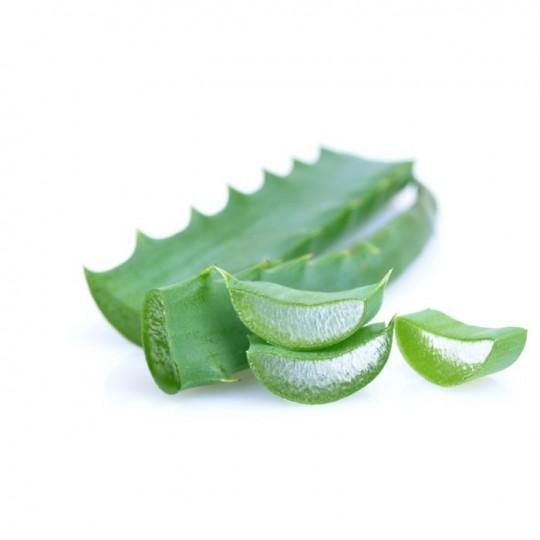 Aloe Arborescens Foglie Fresche 1 Kg