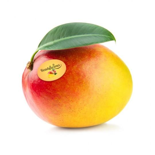 "Mango fresh Kent ""Ready to eat"" - 1 fruit"