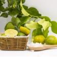 Bergamot - Fresh fruit - 1Kg