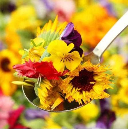 Fiori eduli freschi misti di stagione ordina su FruttaWeb.com