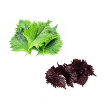 Shiso mixed 20 flowers