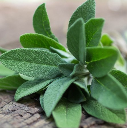 Salvia Semi Disidratata Elody: Acquista Online con un Click su FruttaWeb.com
