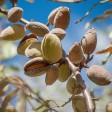 Mandorle Biologiche Naturali con Guscio: Acquista Online con un Click