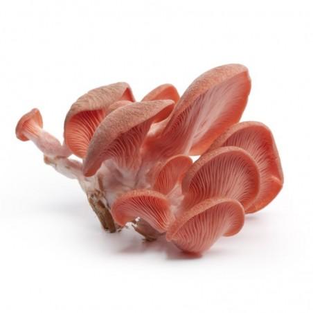 Funghi Oyster freschi (Pleurotus ostreatus): Acquista Online con un Click su FruttaWeb.com