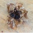 Black garlic - tray of 100 gr