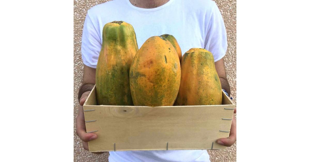 Papaya Formosa in cassetta: Acquista Online su FruttaWeb.com