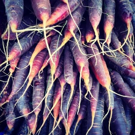 Carote Viola Purple Haze: Acquista Online con un Click su FruttaWeb.com