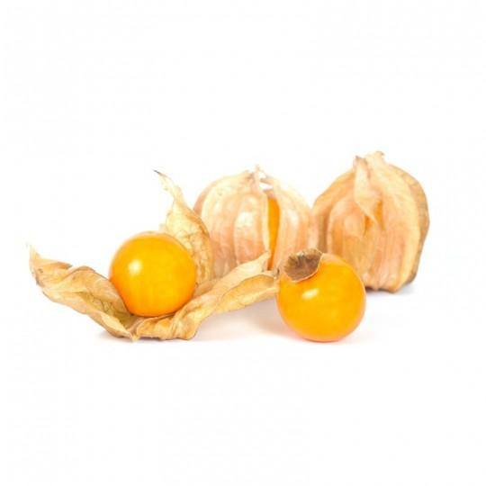 Alchechengi (Physalis) Acquista Online con un Click su FruttaWeb.com