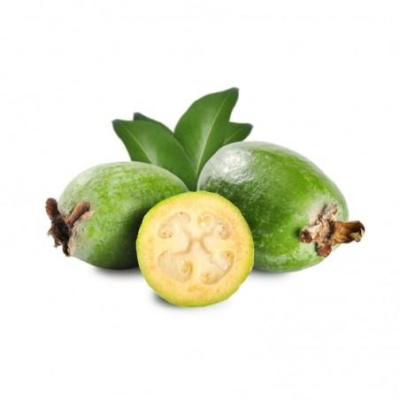 Feijoa: Acquista Online con un Click su FruttaWeb.com