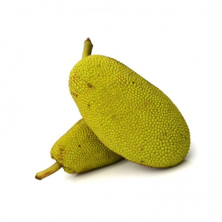 Jackfruit fresco vendita online | FruttaWeb.com