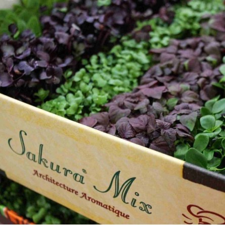 Sakura Mix Koppert Cress Vendita Online