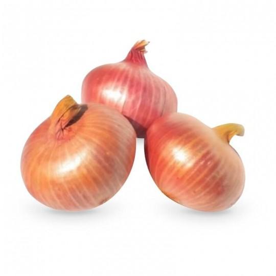 Sweet Onion Ramata di Montoro - 1 piece