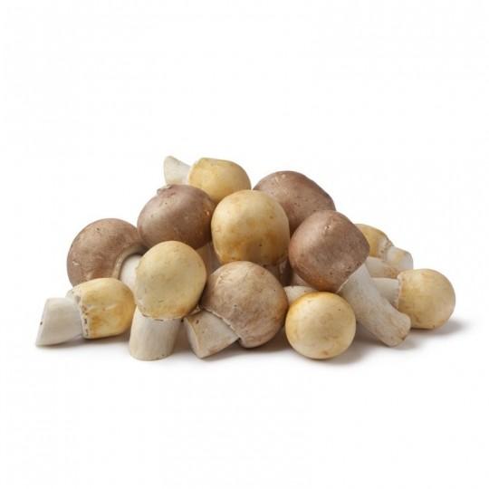Fresh Agaricus Arvensis mushroom
