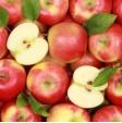 Primo piano sulle mele biologiche appena raccolte e coltivate con passione in Italia
