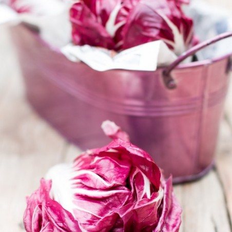 Radicchio rosso biologico Almaverde Bio - acquista online su FruttaWeb caratteristiche