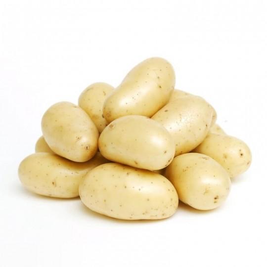 "Selected ""Kennebec"" Potatoes"