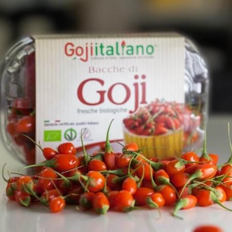 Bacche di Goji Fresco Italiano Biologiche: Acquista Online su FruttaWeb.com