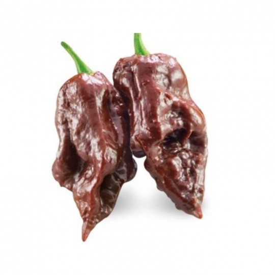 Peperoncino Trinidad Scorpion Chocolate Acquista Online