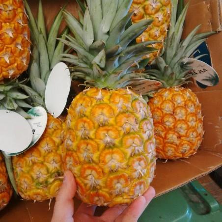 "Ananas ""Via Aerea"" - 1 frutto"