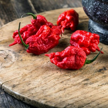 Peperoncino Carolina Reaper disponibile ora su FruttaWeb