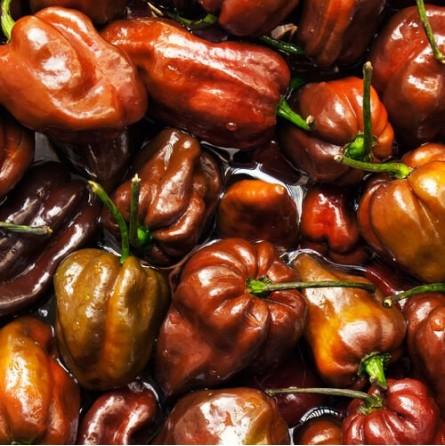 Peperoncino Habanero Chocolate - acquista online su FruttaWeb.com
