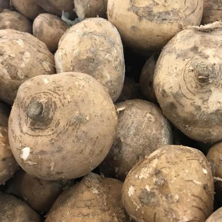 Yam jicama (o patata messicana) - 500 gr: disponibile per l'acquisto su FruttaWeb.com