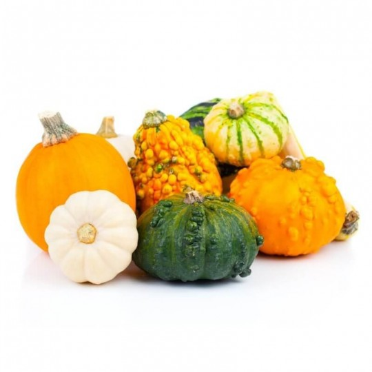 Mix ornamental squash (Gourds)