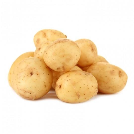Spunta potatoes new crop 2016