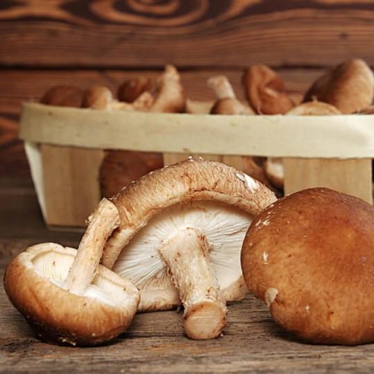 dimagrimento cinese di funghi secchi