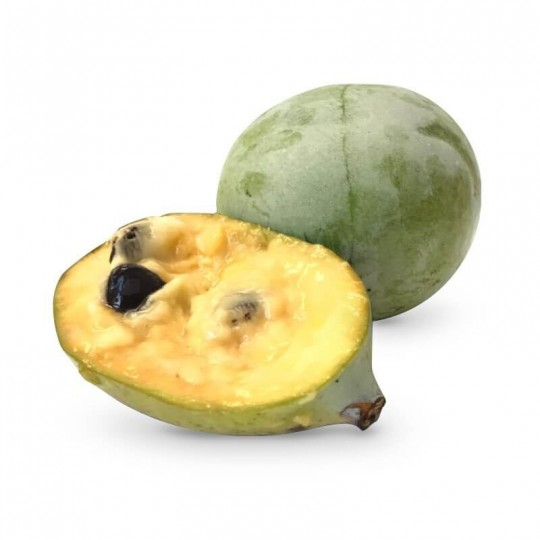 Asimina (Banana di Montagna)