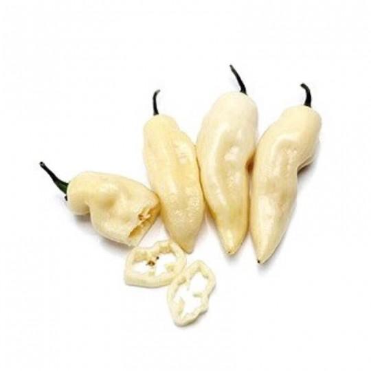 Habanero Bianco White Bullet Acquista Online su FruttaWeb.com