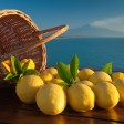 Natural organic sicilian Lemon: shop online at FruttaWeb.com