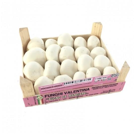 Funghi bianchi Champignon freschi box da 1,5 kg