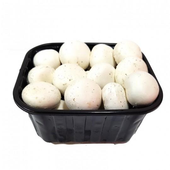 Funghi Champignon Fioroni Biologici Interi Fungo Bio