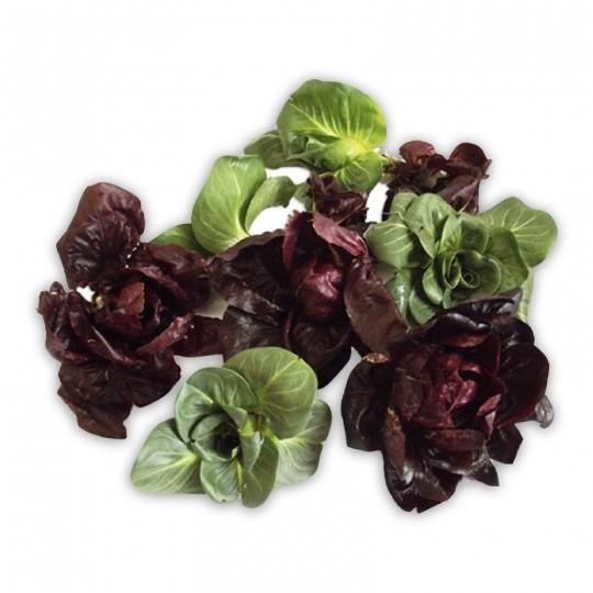 Radicchio Cicorino rosso e verde dell'Emilia Acquista Online FruttaWeb