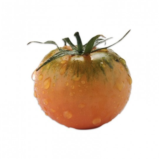 Camone tomato, 100% italian fruit! Shop online on fruttaweb!