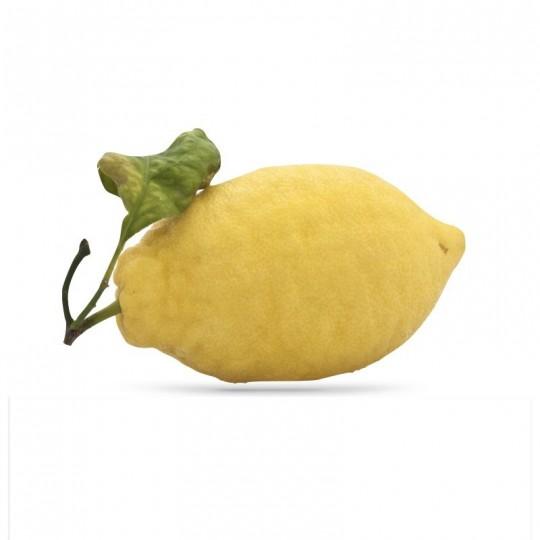Limoni naturali di Trappeto Acquista Online