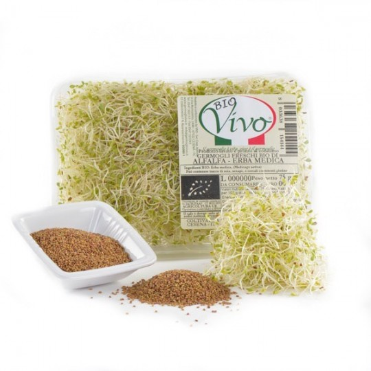 Alfalfa's sprouts - 75 gr
