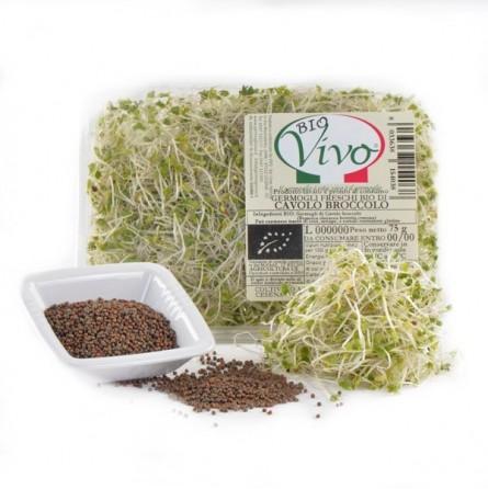 Germogli di Cavolo Broccolo Acquista Online su fruttaweb.com