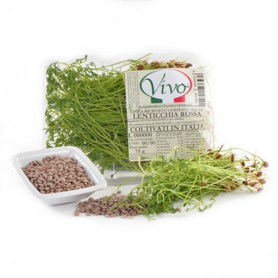 Red Lentil's sprouts - 100 gr