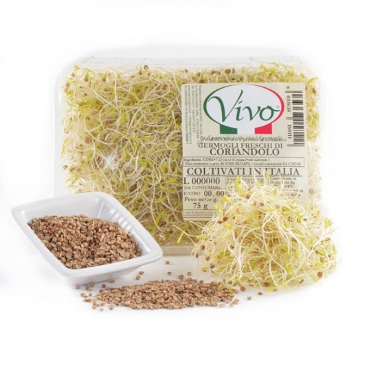 Coriander's sprouts - 50 gr