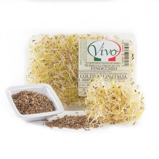 Germogli di Finocchio Acquista Online su fruttaweb.com