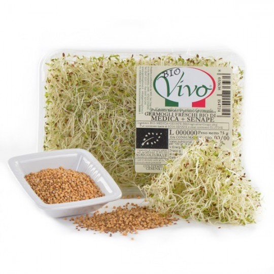 Mustard's sprouts - 75 gr