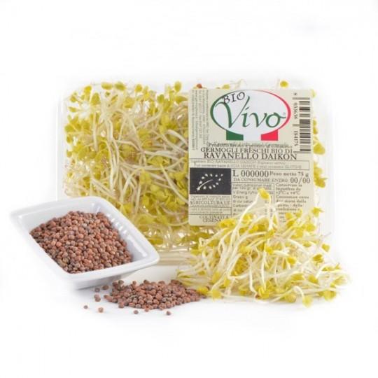 Daikon Radish's sprouts - 75 gr