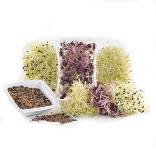 Trimix Fitness's sprouts - 75 gr
