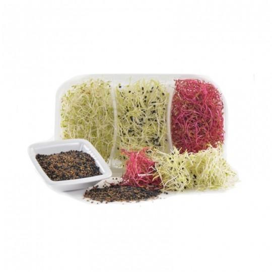 Trimix Gourmet's sprouts - 75 gr