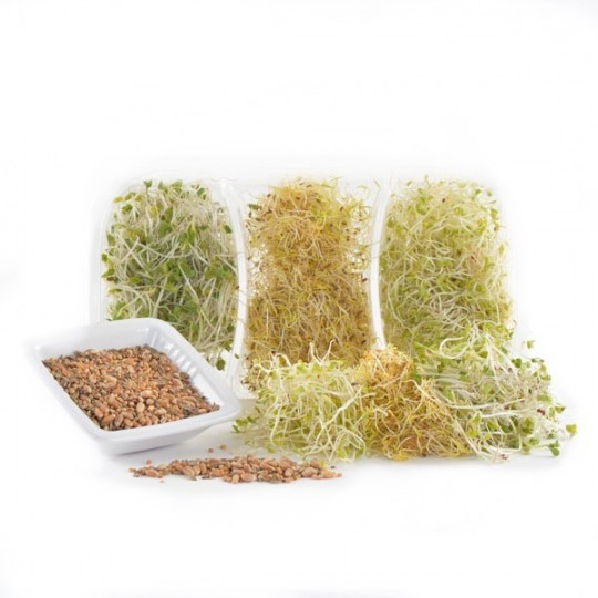 Trimix Wellness's sprouts - 75 gr