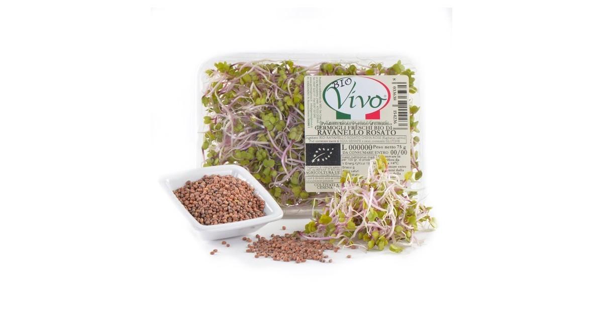 Germogli di Ravanello Rosato - 75 gr